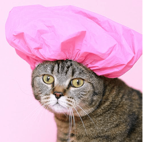 cat with silly hat